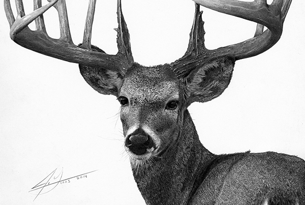 Trophy Buck – Graphite Pencil Drawing